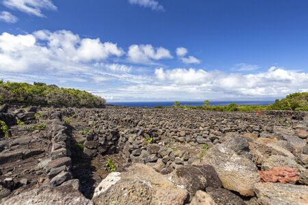 Volcanic vineyard walls with the Atlantic ocean in the distance on Pico island in the Azores, Portugal. 免版税图像