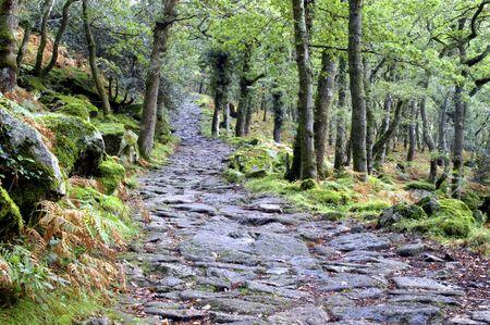 ramble: its a long old road