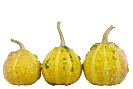 Three pumpkins isolated on a white background. Isolated with clipping path. DFF image.