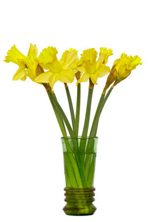 dff image: Daffodil  Narcissus jonquilla  in a very old, destroyed glass flower pot  Isolated on white  Isolated with clipping path  DFF image