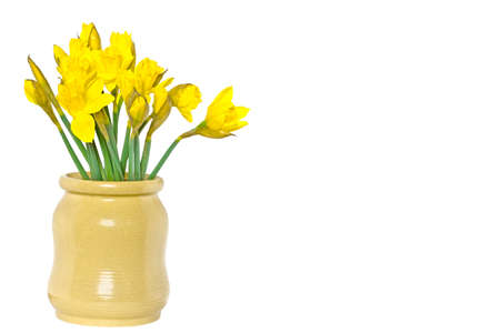Daffodil  Narcissus jonquilla  Stock Photo