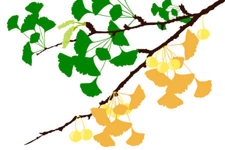 Ginkgo Tree Branch - Illustration