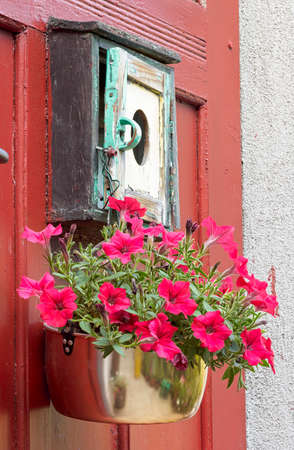Hanging red petunia flowers in flower pot on the old door Stock Photo