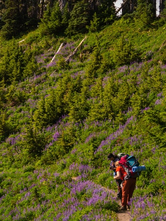 Women backpackers photographing wild flowers on a remote hiking traill photo