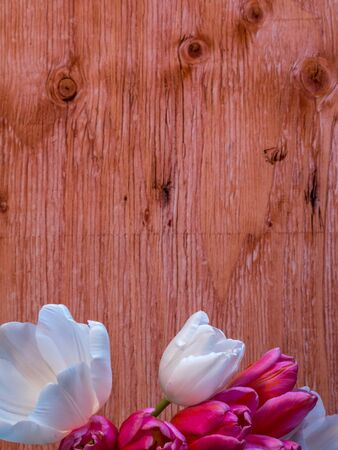 unch of tulips in front of plywood background
