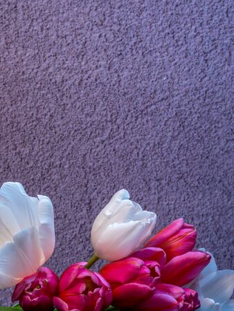 Bunch of tulips in front of grey concrete background