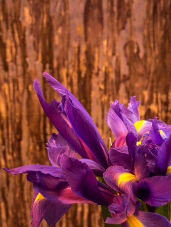bunch of iris on blurred background, portrait orientation