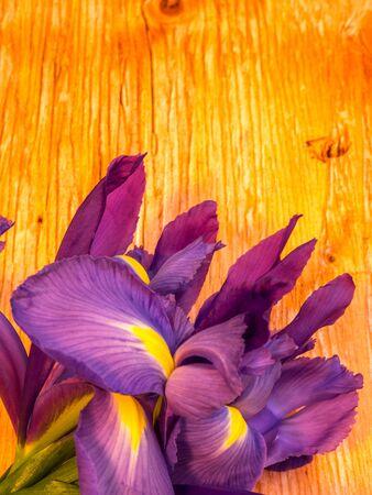 bunch of iris on plywood background, portrait orientation Stock Photo