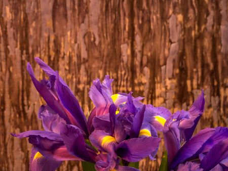 bunch of iris on painted background, landscape orientation Stock Photo
