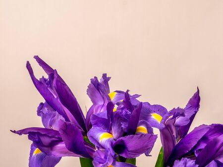 Bunch of iris on white background