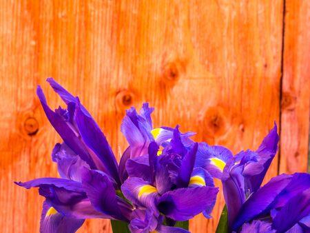 bunch of iris on plywood background, landscape orientation