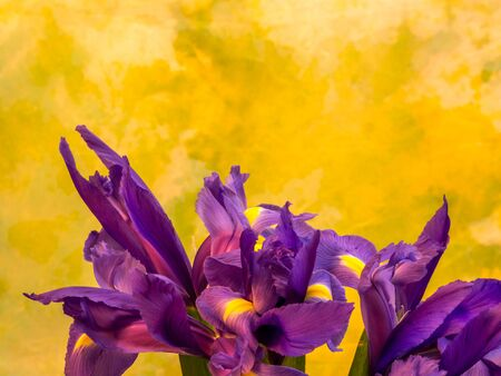 bunch of iris on yellow and green background