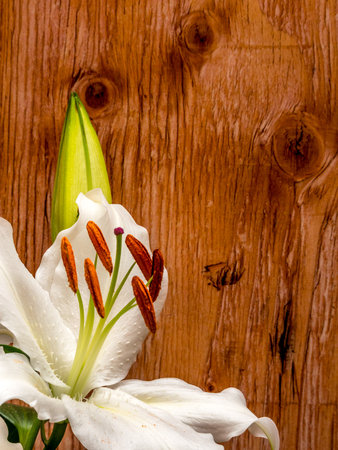 Easter lily with copy space on plywood