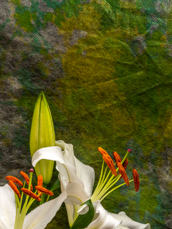 Easter lily with copy space on multicolored background