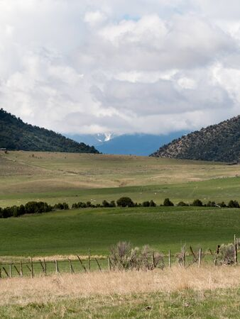 pastoral scene including sheep fence line,  distant mountains