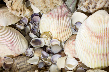 This is a photograph of Sea shells Foto de archivo