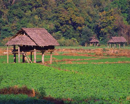 Huts in Thailand farm field photo