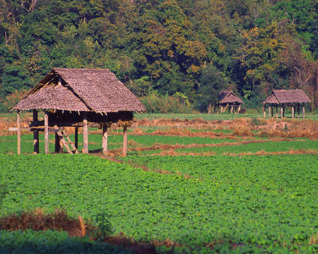 Huts in Thailand farm field