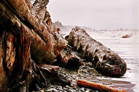 Drift logs at Olympic National Park Imagens