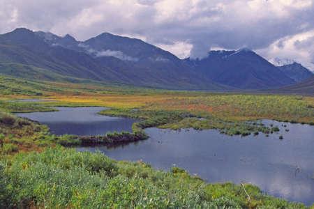 denali: beaver pond in Denali National Park Alaska Stock Photo