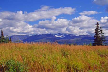 Alaska grassland Stock Photo - 1423269