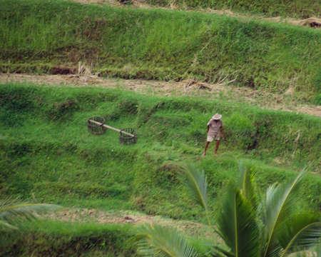 バリ島の丘の中腹に農業