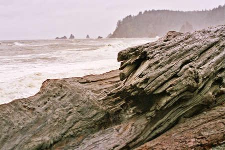 olympic coastal driftwood Imagens