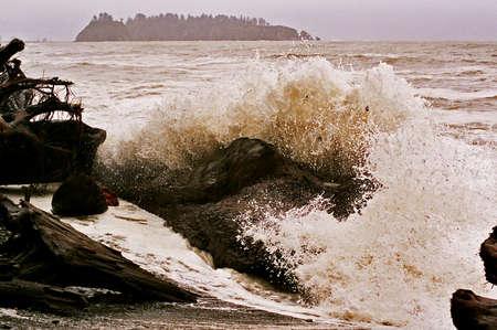 Olympic surf crashing on driftwood