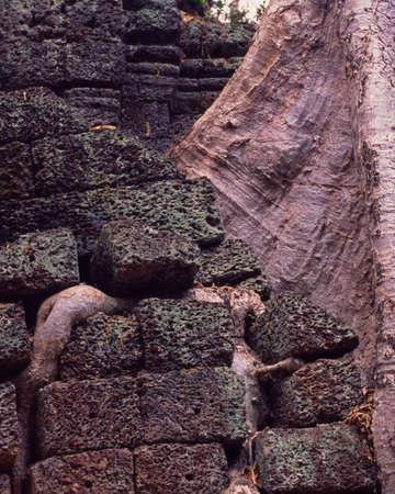 Tree routes between bricks