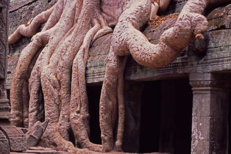 thick tree routes on ancient temple