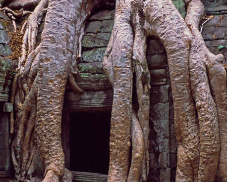 Thick rounts covering Angkor wat temple