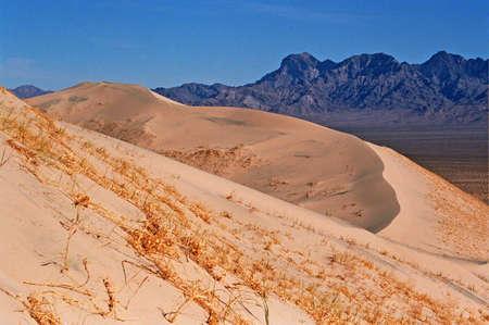 dry grass sand dunes
