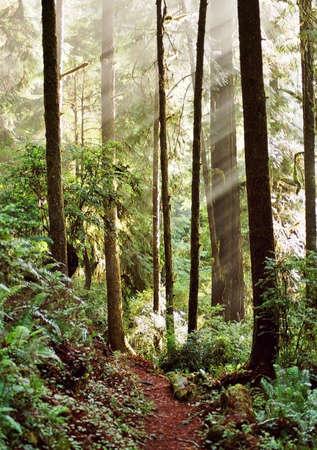 sun lit: sun lit path in forest