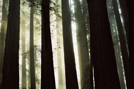 light through woods