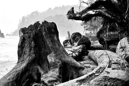 sports competition driftwood black and white Фото со стока - 1999294