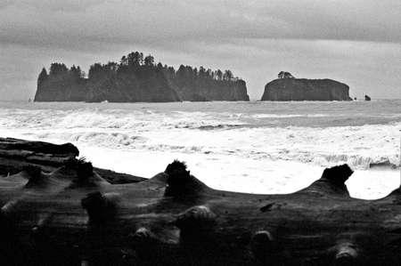 dead tree on sea shore Фото со стока