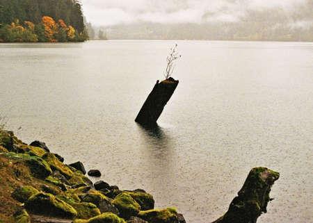 mossy lakeshore