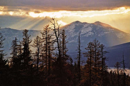 sun beams in wilderness Imagens