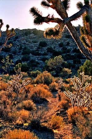 western desert plants Imagens