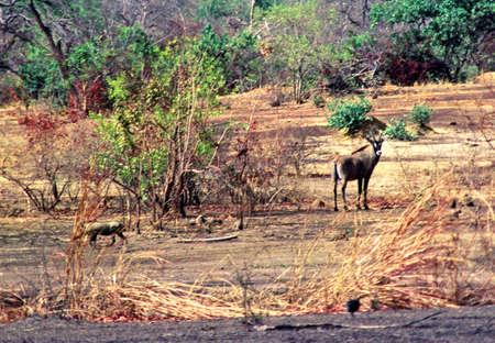 Antilope und Warzenschwein  Standard-Bild - 2805657