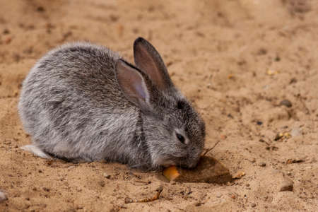 Cute little gray rabbit living in a Zoo. Imagens
