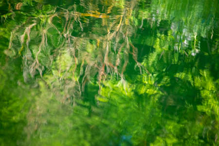Reflection of the green summer trees in the moving water with warm sunlight and artistic atmosphere