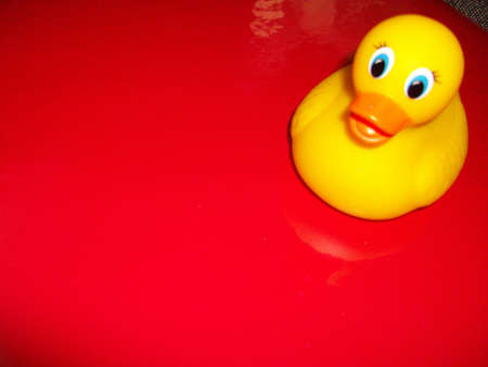 Red  rubber  duck  on  red  background Stock Photo