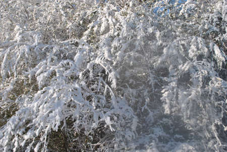 snow  covered  trees Stock Photo - 18000469
