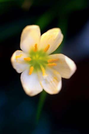 delicate white flower photo