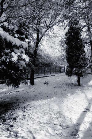 winter scene  photo