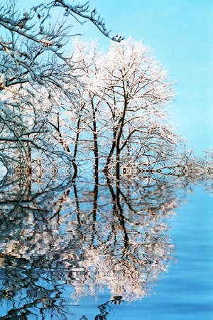 trees mirrored in the lake photo