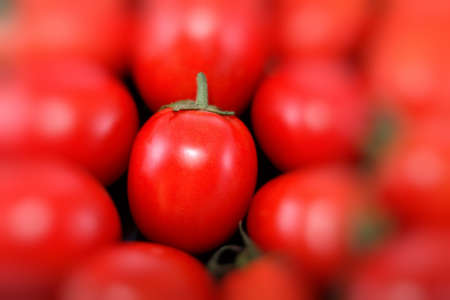 red tomato in diffuse  light  photo