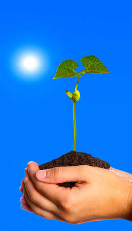 green plant held in hands Stock Photo