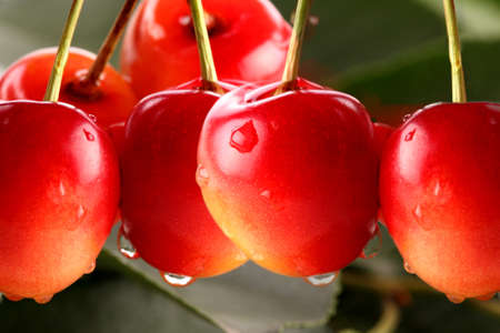 cherry red fruits in macro position with water drops Stock Photo